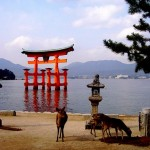 Itsukushima2 (Photo by Tanja Rauh)