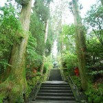 approach-to-hakone-shrine